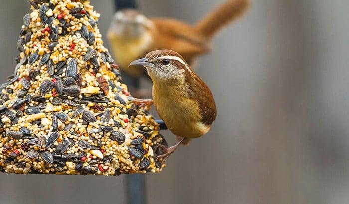 how to make homemade birdseed blocks