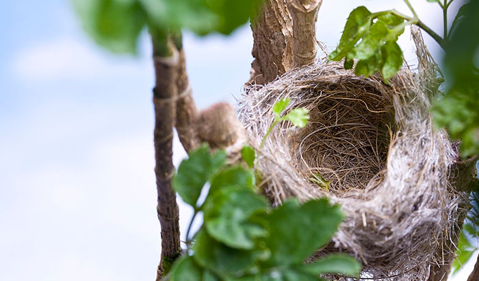 how to move a bird nest with eggs