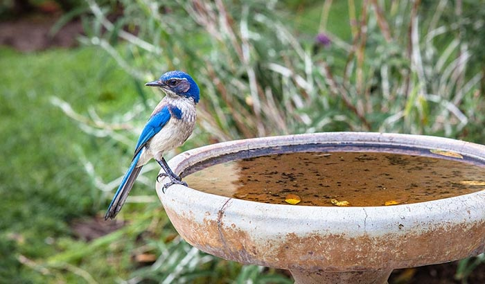 where to place a bird bath