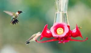 do hummingbird feeders attract bees
