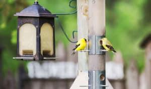 how do birds find feeders
