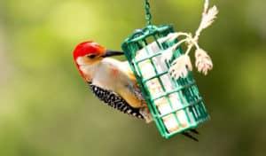 how to hang suet feeder