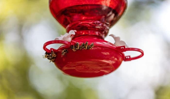 how to keep bees away from hummingbird feeders