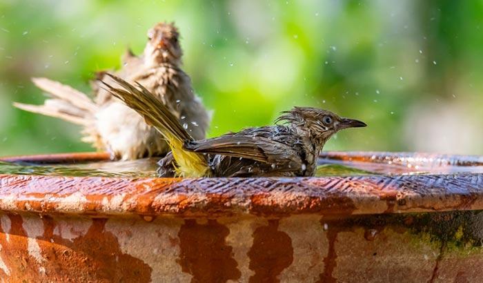 how to keep bird baths clean