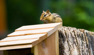 how to keep chipmunks out of bird feeder