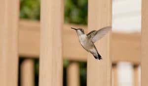 how to make a hummingbird house