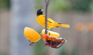 how to make a jelly bird feeder