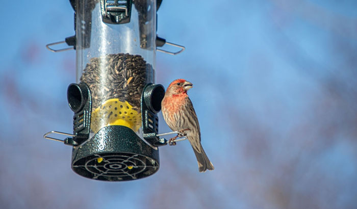 why aren't finches coming to my feeder