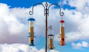 best bird feeder pole