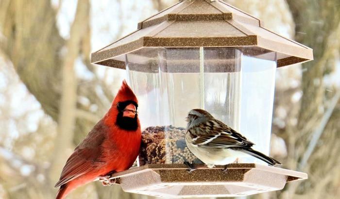 best feeder for cardinals