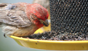 best finch feeders