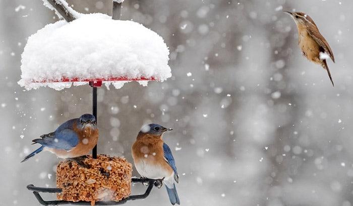 best mealworm feeder for bluebirds
