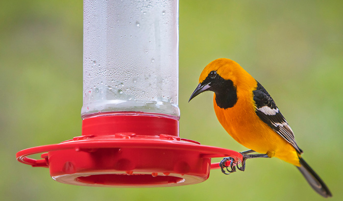best oriole feeders with bee guard