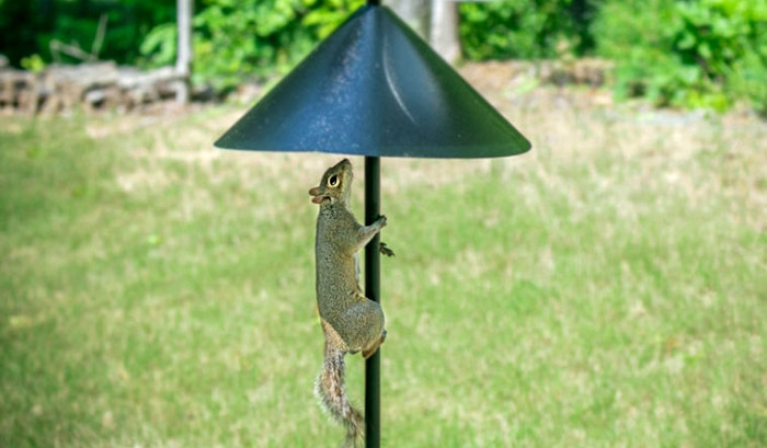 best squirrel baffle