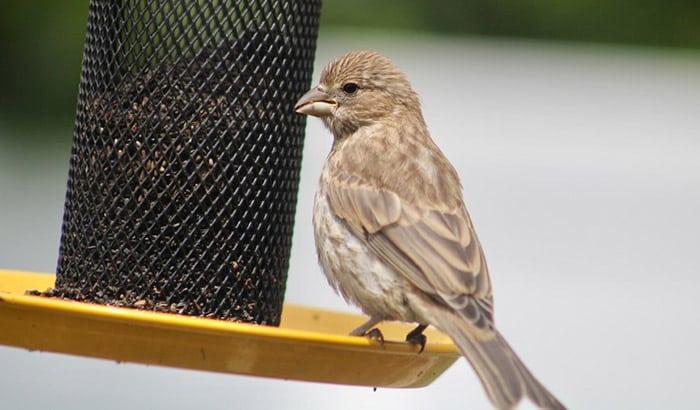 best thistle bird feeders