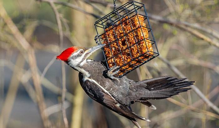 best woodpecker feeder