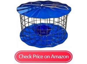 erva bluebird feeders