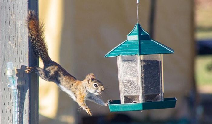 hanging squirrel feeders
