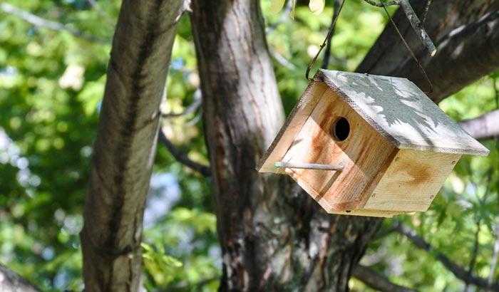 how to build a wren birdhouse