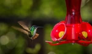 how to feed a baby mockingbird