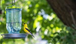 how to make a bird water feeder