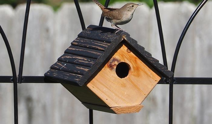 installing a wren birdhouse in your backyard