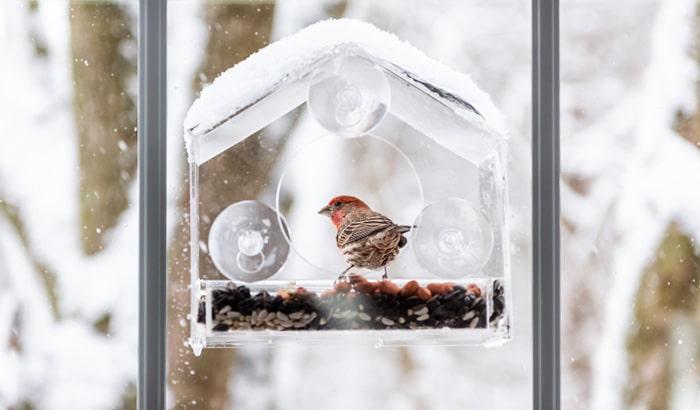 window attached bird feeders