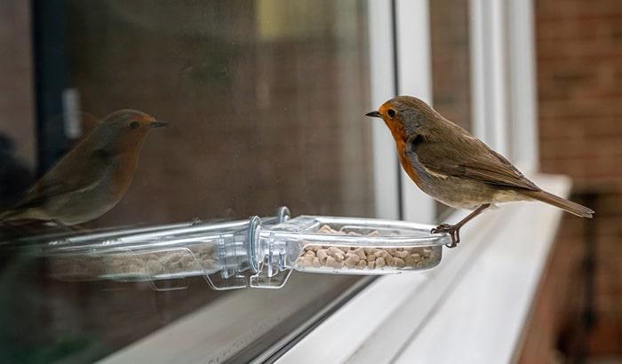 window mounted bird feeders