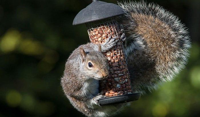 window squirrel feeder