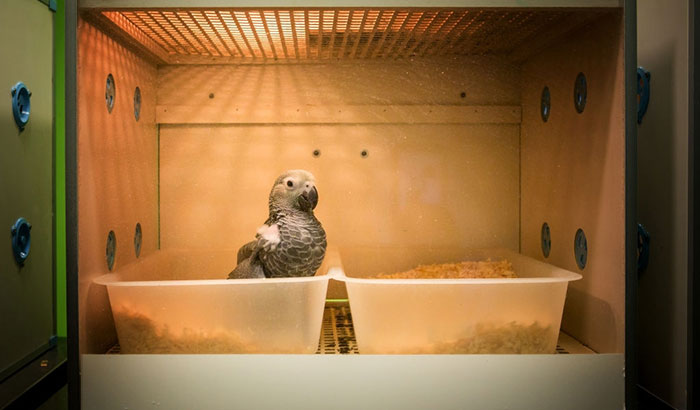 different ways in treating sick bird at home
