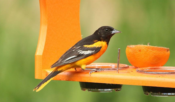 how to make an oriole feeder