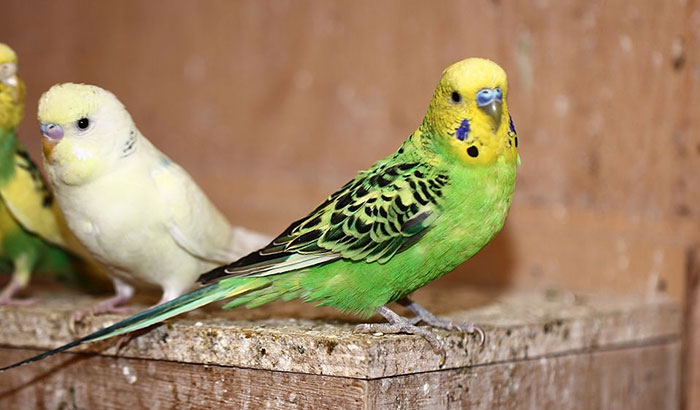 making a nesting box for parakeets