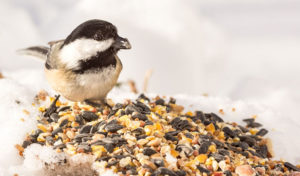 how to keep bird seed from falling on the ground