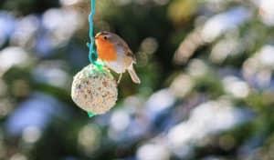 how to make bird seed balls without lard