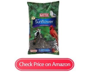 kaytee wild bird black oil sunflower food