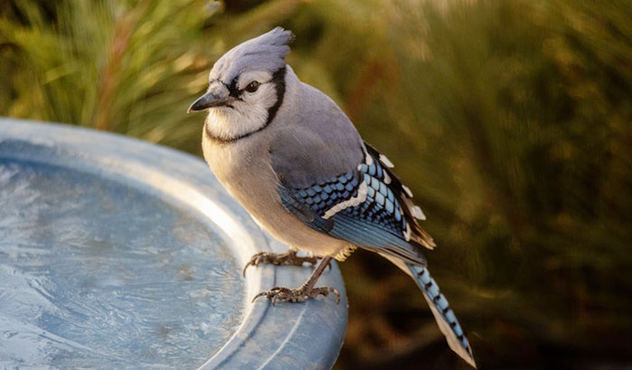 keeping the bird bath from freezing