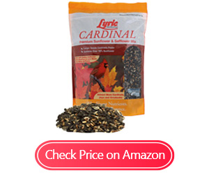 lyric 2647467 cardinal sunflower safflower mix