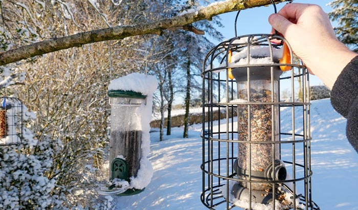 where to place a bird feeder